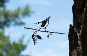 Boomklever Metalbird